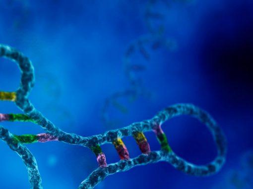 II Reunión Argentina de Biología de ARNs no codificantes