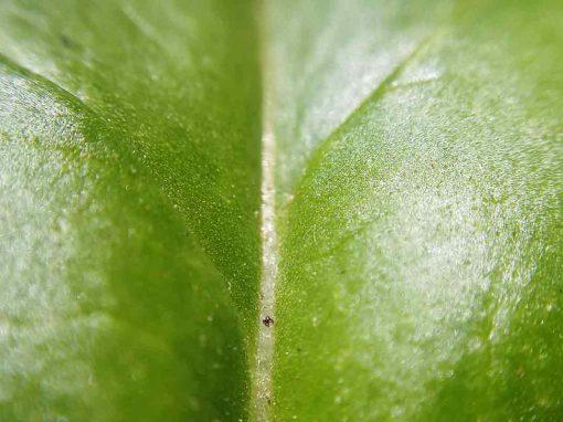 La salud de las plantas, una mirada desde la bacteriología vegetal